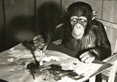 A black and white photograph of Congo the chimp painting at London Zoo.