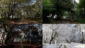 David Hockney, The Four Seasons, Woldgate Woods (Spring 2011, Summer 2010, Autumn 2010, Winter 2010), 2010–11