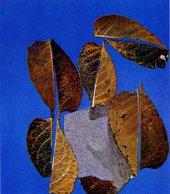 Eva Hesse Free Study with leaves