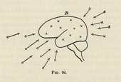 Diagram of the human brain from William James, The Principles of Psychology, vol.2, New York 1890