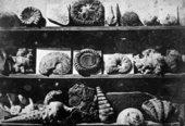 Louis-Jacques-Mandé Daguerre, Shells and Fossils 1839