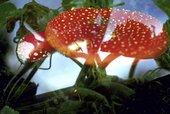 Peter Fischli, David Weiss Flowers, Mushrooms