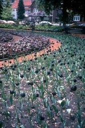 Jenny Holzer Black Garden 1994