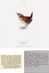 Jamie Shovlin Jenny the Wren from The Twitcher