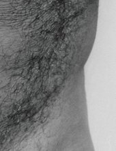 John Coplans Detail of Self-Portrait Torso Front 1984 two