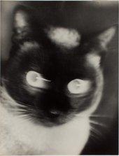"Otto Umbehr ""Katz"" - Cat 1927 The Sir Elton John Photographic Collection © Phyllis Umbehr/Galerie Kicken Berlin/ DACS 2016"