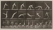 Eadweard Muybridge Head-spring, a flying pigeon interfering. Plate 365 1887