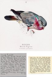 Jamie Shovlin Roger the Wood Pigeon