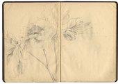 Yayoi Kusama, Study of a Peony from a sketchbook