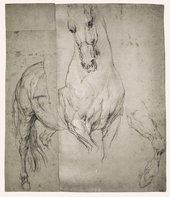 Anthony Van Dyck Studies of a Horse 1633