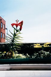 Wolfgang Tillmans Lily & Oak 1999 Photograph