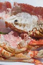 Inkjet print photograph of a fly sitting on half opened seafood including lobster and crabs