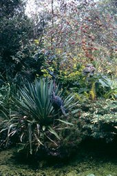 Pond and yucca, Broughton House