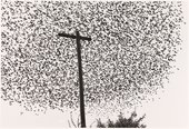 Photograph by Graciela Iturbide - Birds on the Pole, Guanajuato, Mexico 1990
