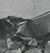 Joseph Beuys, Coyote, 1974, photograph by Caroline Tisdall (detail)