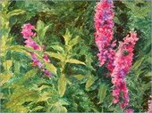 The purple loosestrife on the upper right hand corner of the painting, near the edge of the frame, alludes to 'long purples' in the play. Shakespeare actually meant the purple orchid.