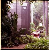 National Botanical Gardens, Havana, Cuba, image (c) Eva Sajovic