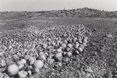 Santu Mofokeng, Undersized, Stunted-in-Growth and Rotting Melons Dumped in the Veld Outside Kroonstad, Free State, 2007, printed 2011, from the series Climate Change, 2007, gelatin silver print on paper, 64 x 98 cm