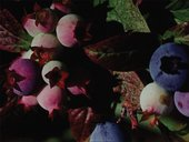 Phill Niblock Cross Country (Environments II) 1970, film still. Courtesy the artist