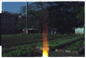 Urban Permaculture Garden, Havana, image (c) Eva Sajovic