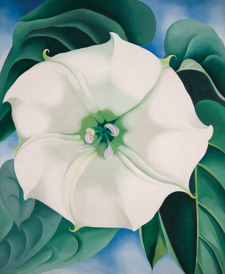 Tate modern to show iconic flower painting by georgia okeeffe georgia okeeffe jimson weedwhite flower no 1 1932 mightylinksfo