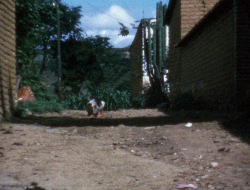 Ana Mendieta: 'Pain of Cuba / body I am' – Film at Tate ...  Ana Mendieta Chicken Piece